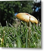 Chipmunks View Of A Mushroom Metal Print