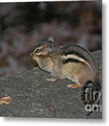 Chipper Metal Print