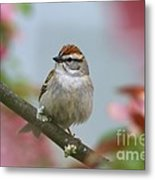 Chipping Sparrow In Blossoms Metal Print by Deborah Benoit