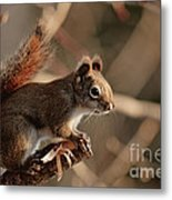 Chippy Perched Metal Print