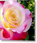Choice Garden Rose Metal Print