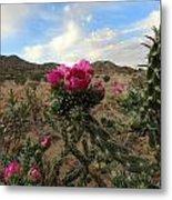 Cholla Cactus Blooming In The Sandia Foothills Metal Print