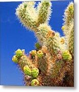 Cholla Cactus I By Diana Sainz Metal Print