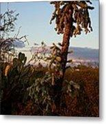 Cholla Cactus View Metal Print