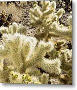 Cholla (cylindropuntia Bigelovii) Cactus Metal Print