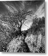 Chosen Path Metal Print