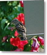Chow Time At The Bird Feeder Metal Print