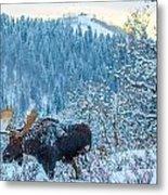 Christie Moose Metal Print