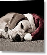 Christmas Beagle Metal Print by Paulina Szajek