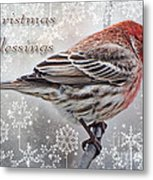 Christmas Blessings Finch Greeting Card Metal Print