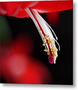 Christmas Cactus Pistil And Stamens Metal Print by Rona Black