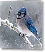 Christmas Card Bluejay Metal Print