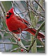 Christmas Cardinal Metal Print