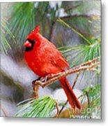 Christmas Cardinal - Male Metal Print