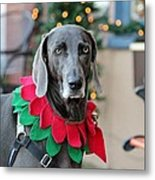 Christmas Dog Metal Print