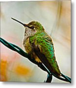 Christmas Humming Bird Metal Print
