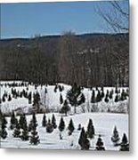 Christmas In March Metal Print