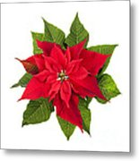 Christmas Poinsettia  Metal Print