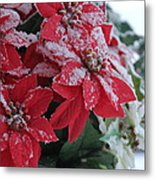 Christmas Poinsettia Flowers Metal Print