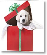 Christmas Puppy Metal Print by Diane Diederich