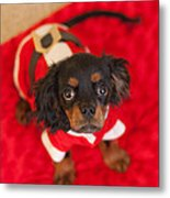 Christmas Puppy Metal Print by Kay Pickens