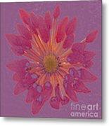 Chrysanthemum Digitally Softly Toned Metal Print