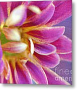 Chrysanthemum Painting Metal Print