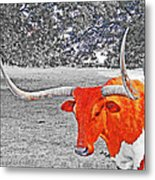 Cibolo Longhorn Metal Print