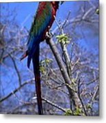 Cincy Parrot Metal Print
