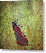 Cinnabar Moth Art Texture Wall Decor. Metal Print
