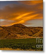 Circle Of Corn At Sunrise Metal Print
