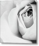 Citrine Rose Bw Palm Springs Metal Print