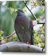 City Bird Metal Print