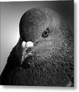 City Bird Gang Leader Metal Print