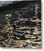 City Ducks 2  Metal Print