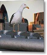 City Seagull Metal Print by Stephen Norris