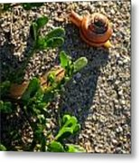 City Snail From Above Metal Print