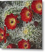 Claret Cactus - Vertical Metal Print by Gregory Scott