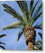 Classic Palms Metal Print