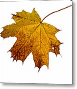 Claws Of The Autumn - Featured 3 Metal Print