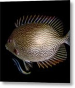 Cleaning Station Metal Print