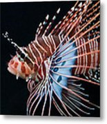 Clearfin Lionfish Metal Print