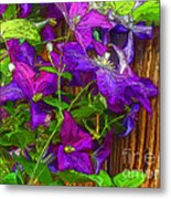 Clematis On The Fence-2014 Metal Print