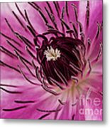 Clematis Up Close Metal Print