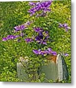 Clematis Vine On Mailbox Metal Print