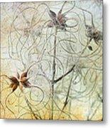 Clematis Virginiana Seed Head Textures Metal Print