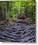 Climbing The Rocks And Roots Of Bald Mountain Metal Print