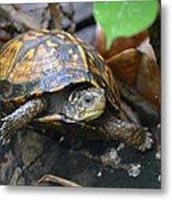 Climbing Turtle Metal Print