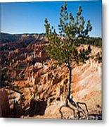 Clinging To The Edge Bryce Canyon Metal Print