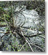 Clinging To Your Roots Metal Print